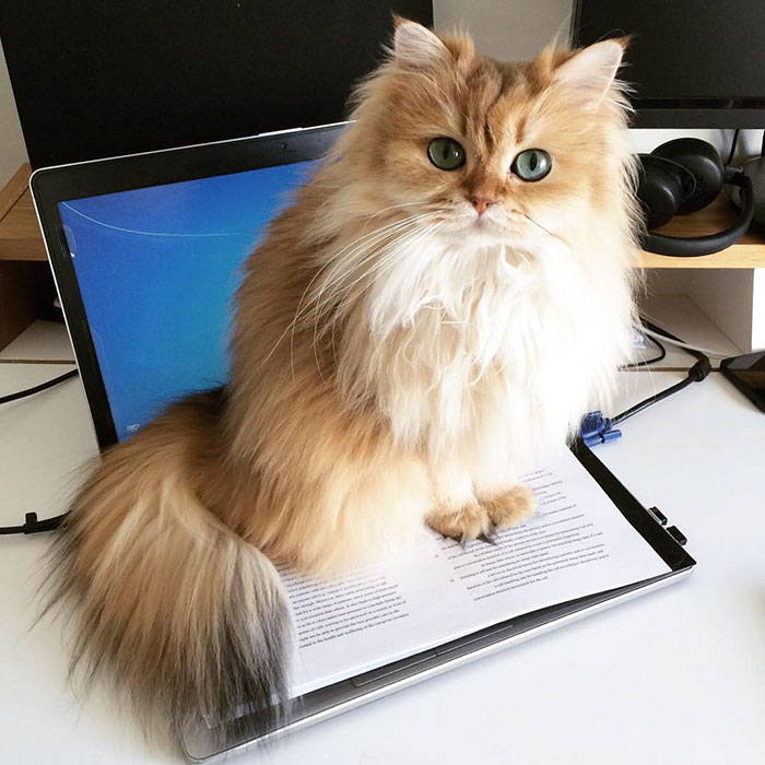 gato_fotogenico_2