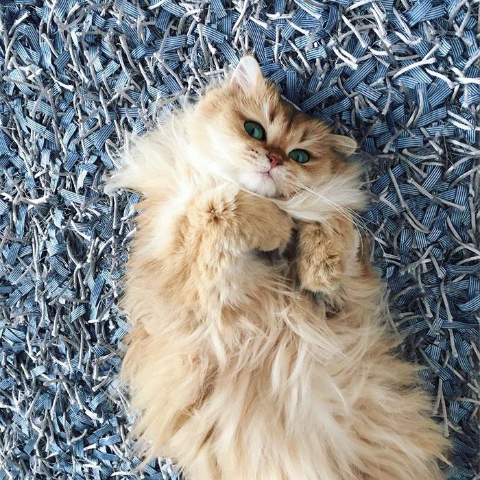 gato_fotogenico_6