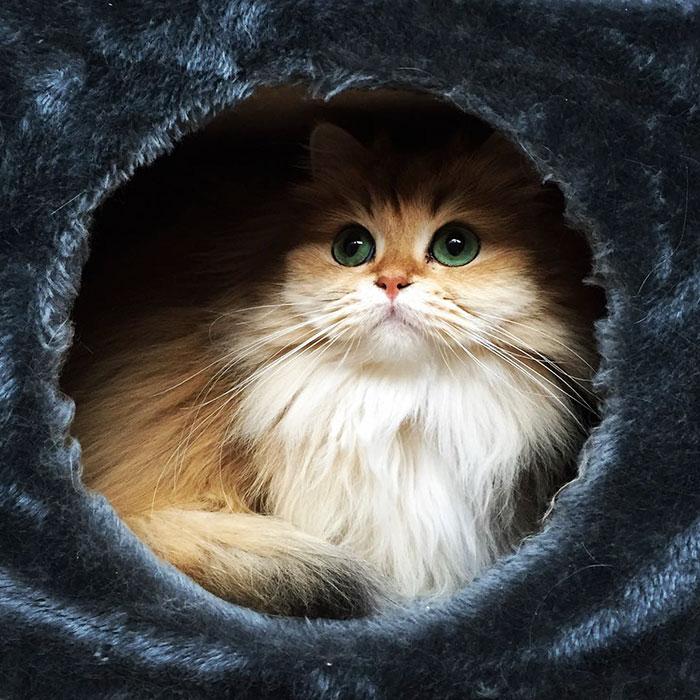 gato_fotogenico_8