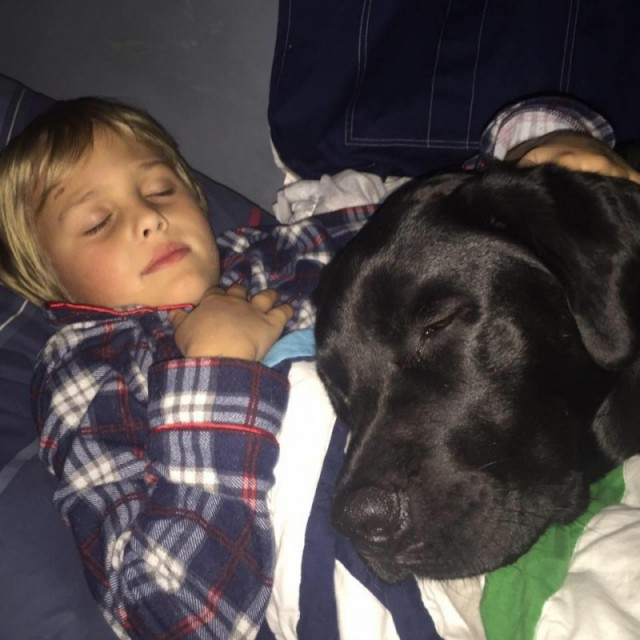 jedi, el perro labrador que cuida de luke el niño con diabetes y le salva la vida 1