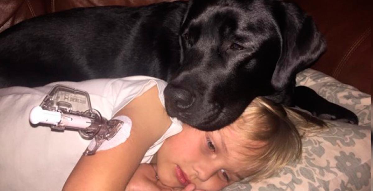 jedi salva la vida a su dueño luke de una bajada de glucosa mientras dormia