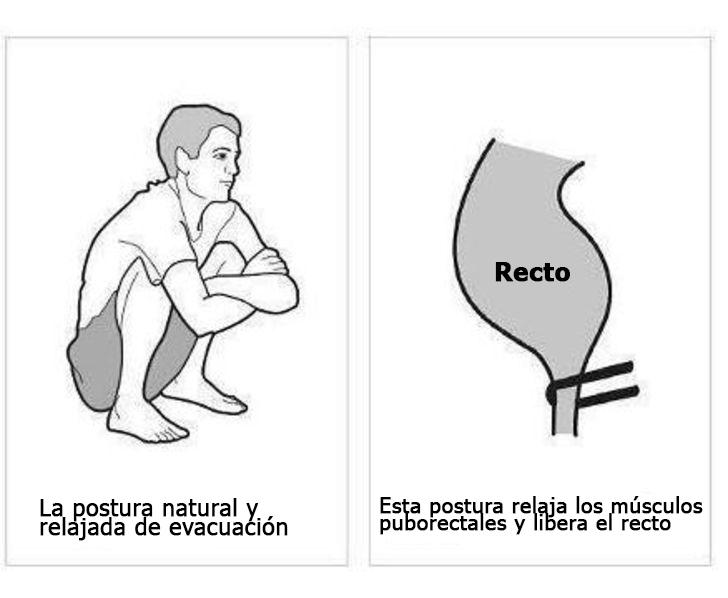 postura correcta para ir al baño