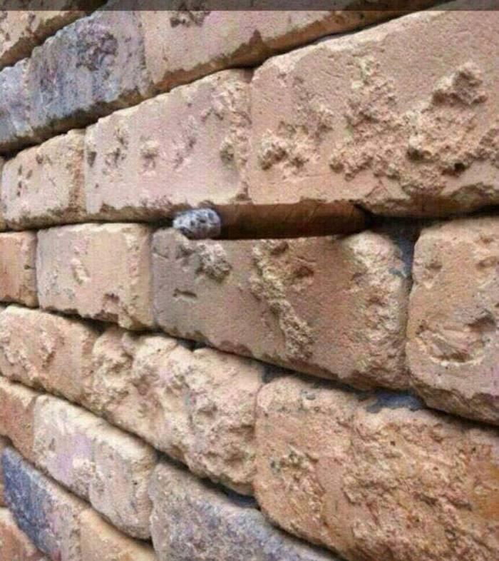 la ilusion optica del muro1