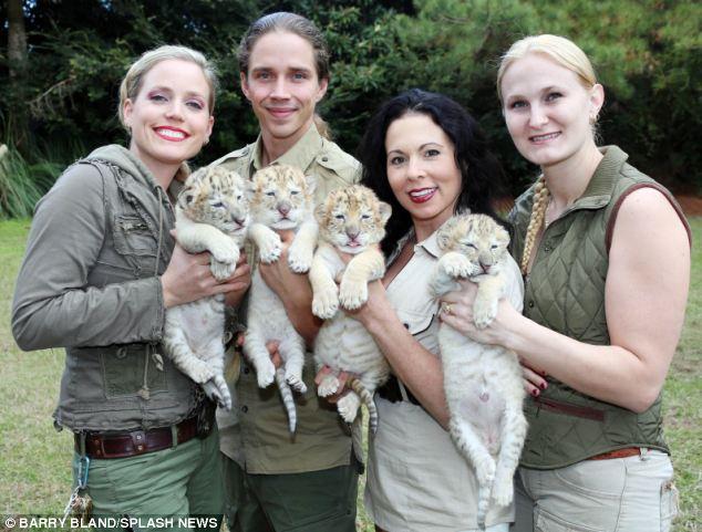 nacen los primeros ligres albinos que se conocen 4