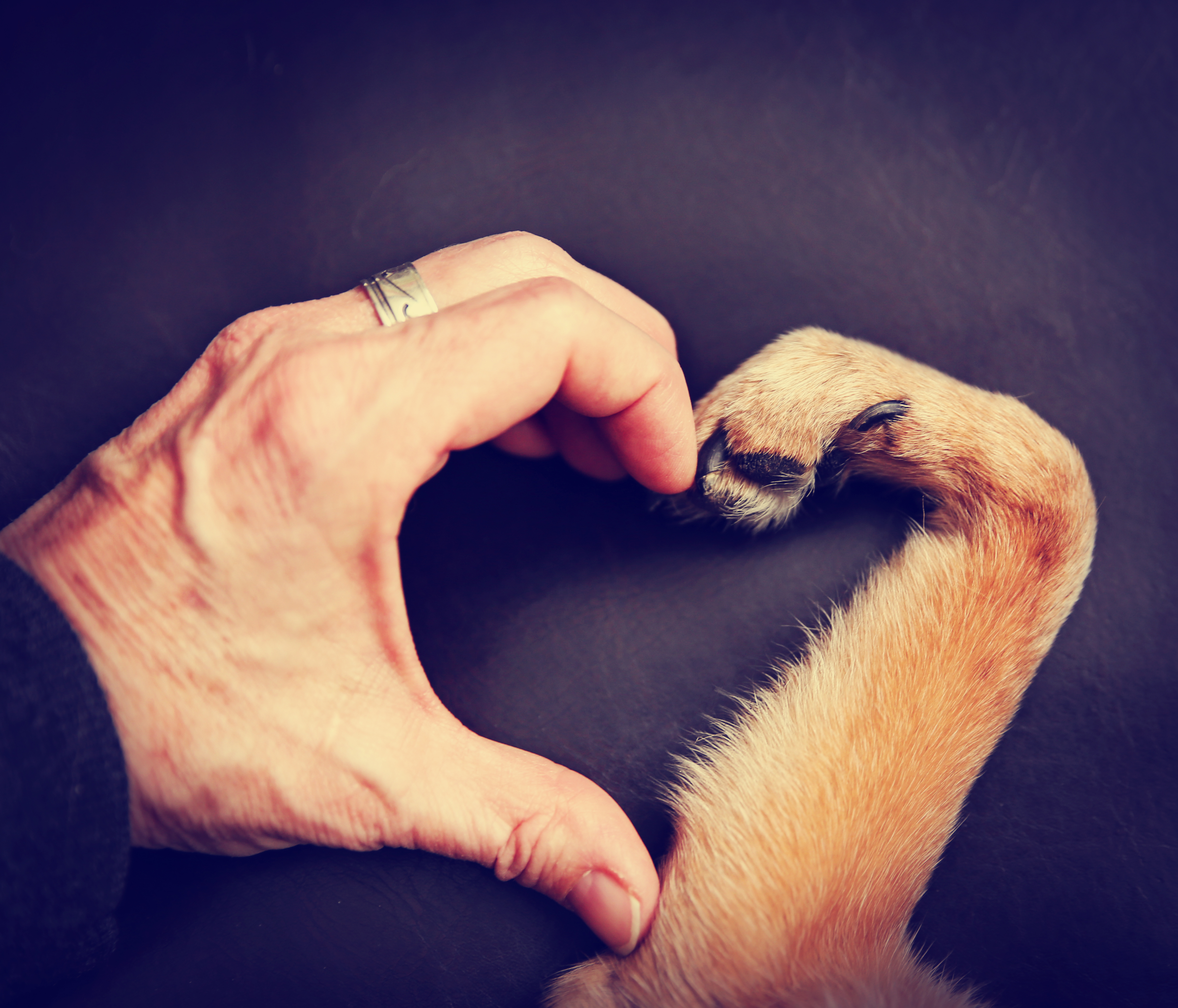 perros chiquitos 15