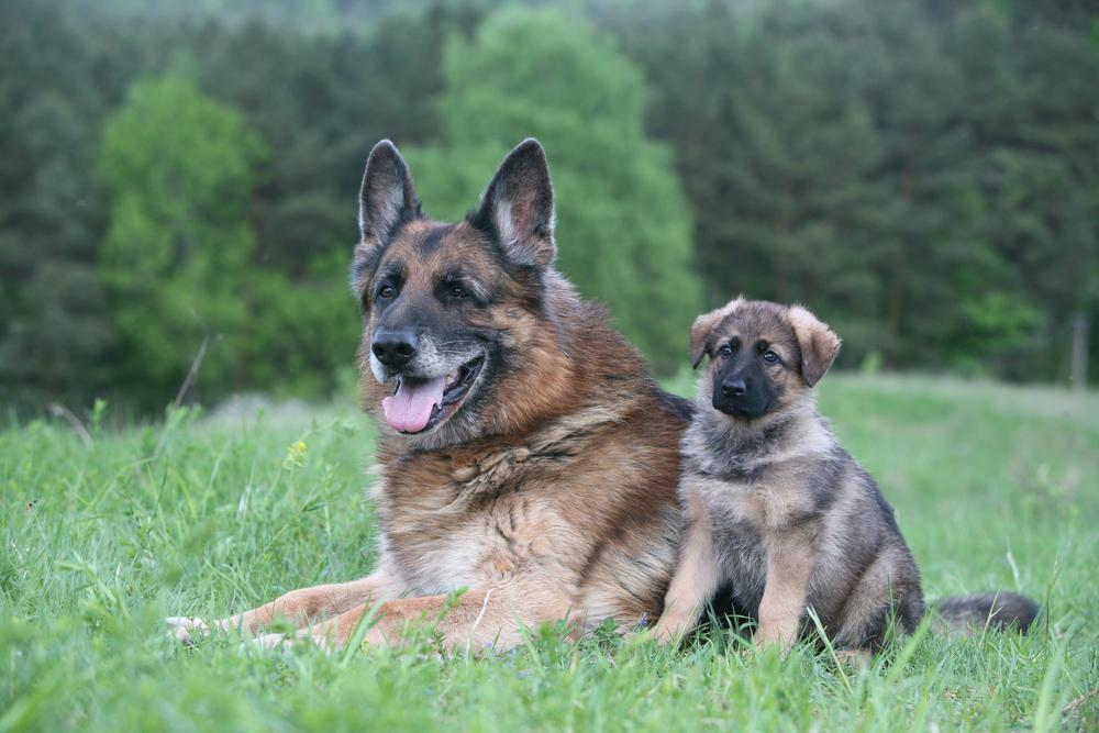 perros_verano_11