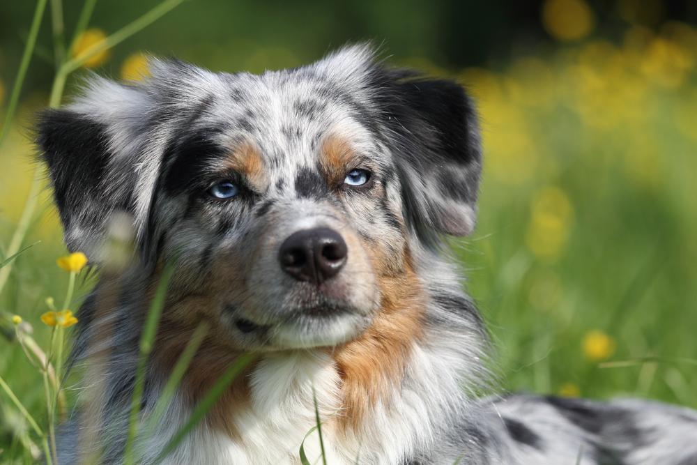 perros_verano_4