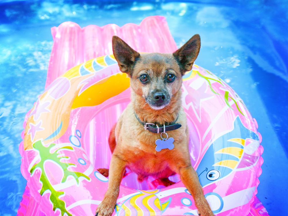 perros_verano_5