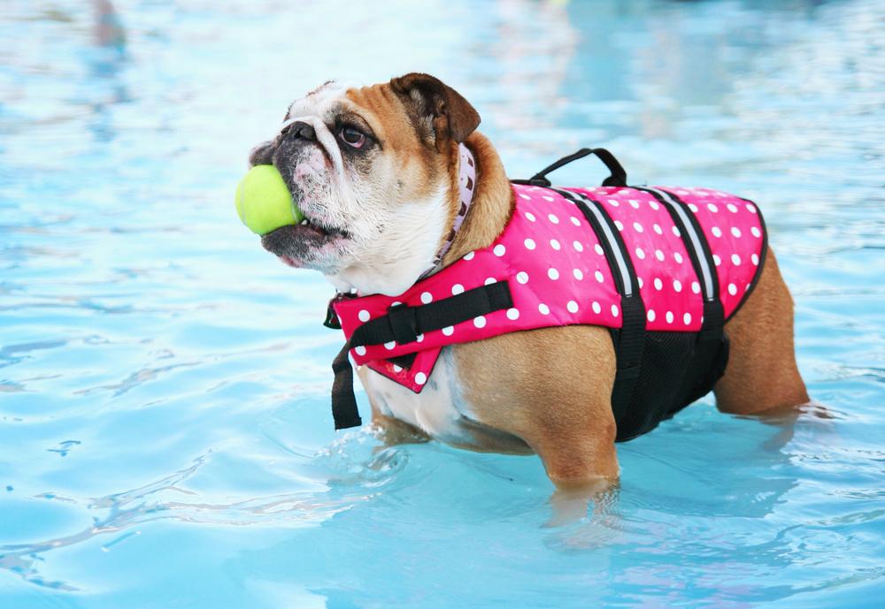 perros_verano_6