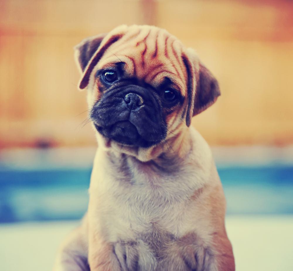 perros_verano_7