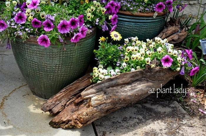 plantas_8