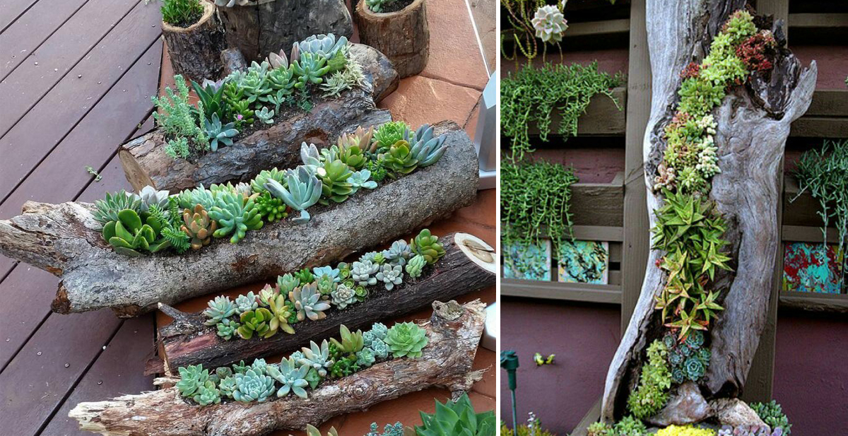 plantas_portada