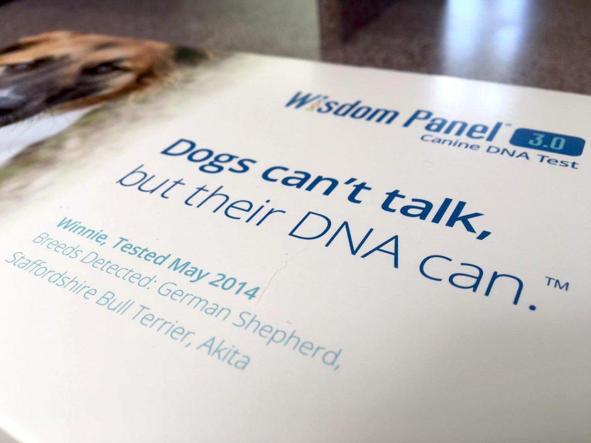 Le hizo un examen de ADN a su perro y descubrio cosas asombrosas 11