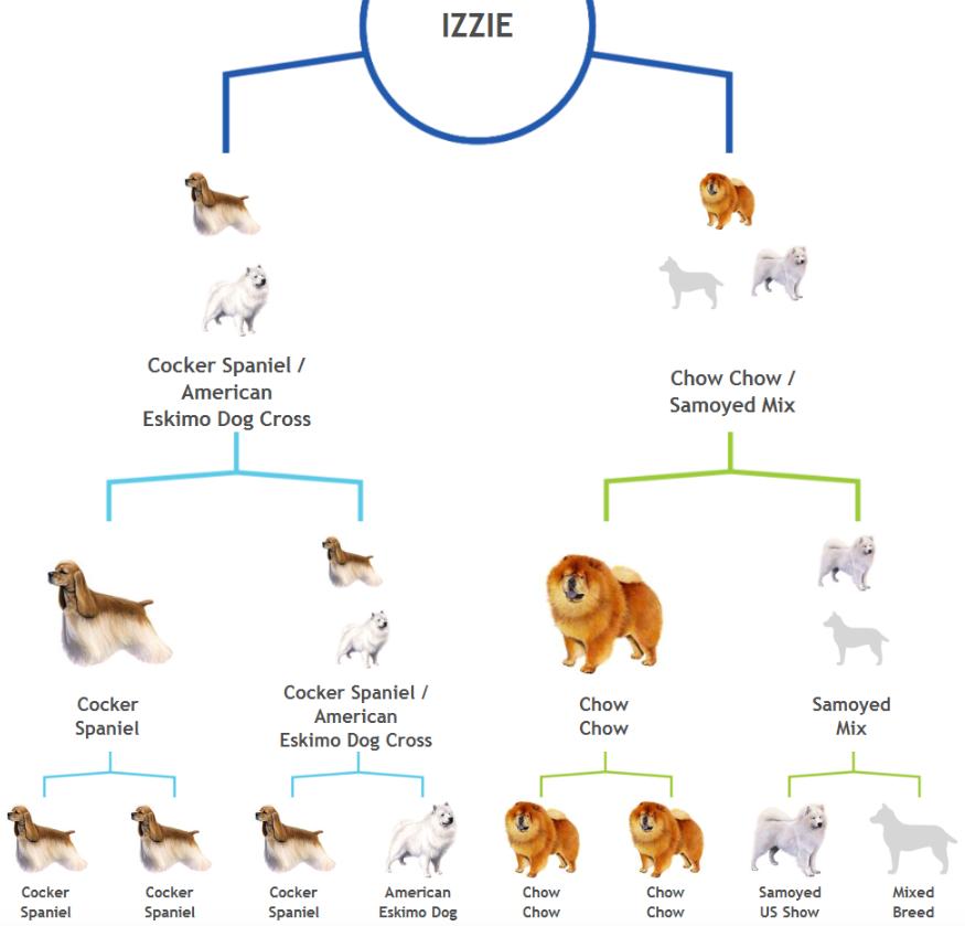 Le hizo un examen de ADN a su perro y descubrio cosas asombrosas 12