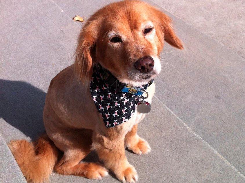 Le hizo un examen de ADN a su perro y descubrio cosas asombrosas 13