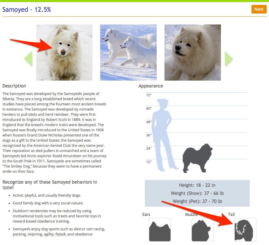 Le hizo un examen de ADN a su perro y descubrio cosas asombrosas 18