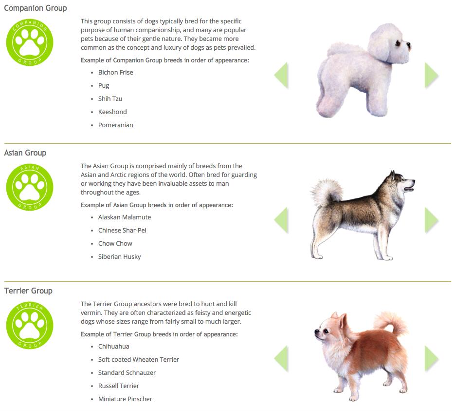 Le hizo un examen de ADN a su perro y descubrio cosas asombrosas 19