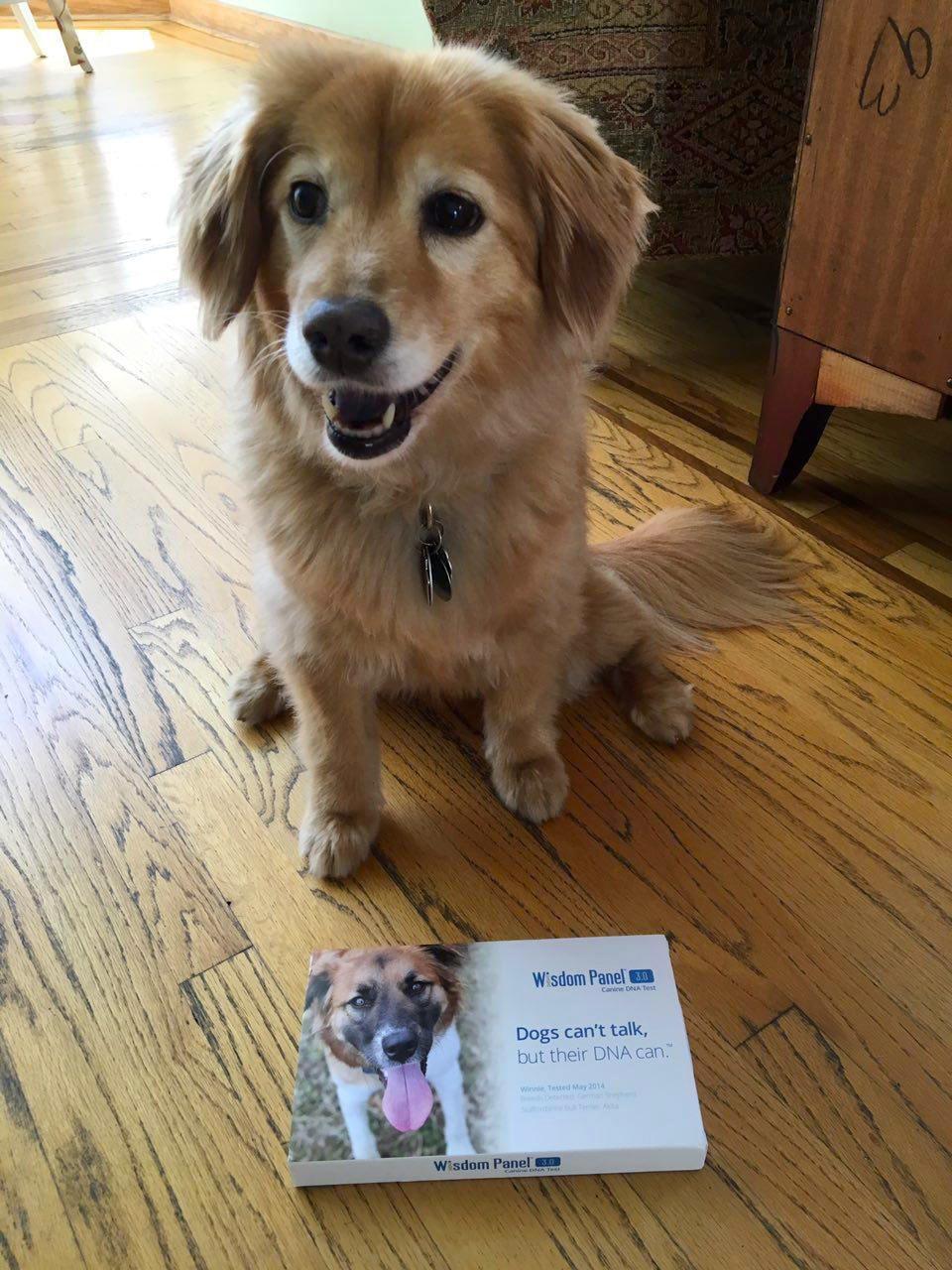 Le hizo un examen de ADN a su perro y descubrio cosas asombrosas 20
