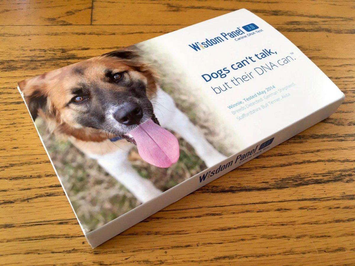Le hizo un examen de ADN a su perro y descubrio cosas asombrosas 4