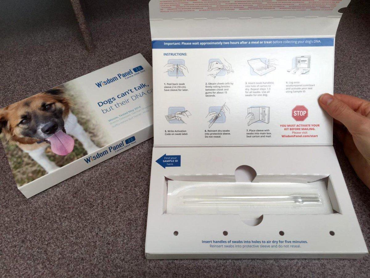 Le hizo un examen de ADN a su perro y descubrio cosas asombrosas 5