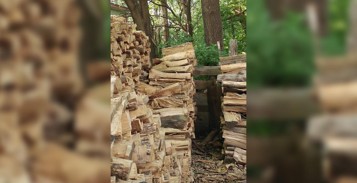 animal escondido en una imagen del bosque