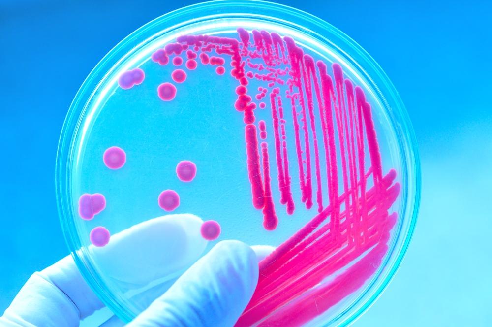 bacterias antibioticos 1