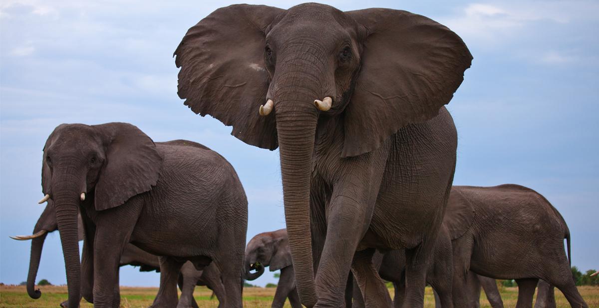 elefantes_portada
