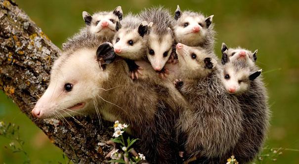 madres del mundo animal en apuros 10