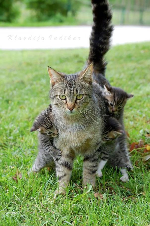 madres del mundo animal en apuros 11
