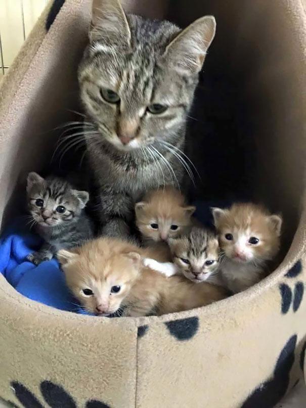 madres del mundo animal en apuros 19