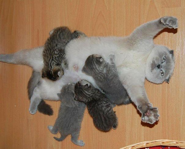 madres del mundo animal en apuros 2