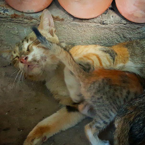madres del mundo animal en apuros 21