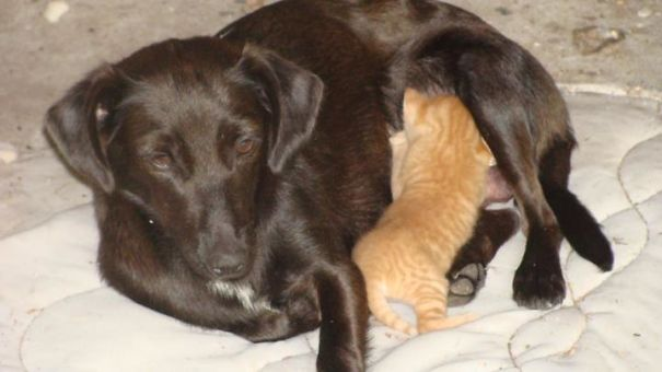 madres del mundo animal en apuros 24