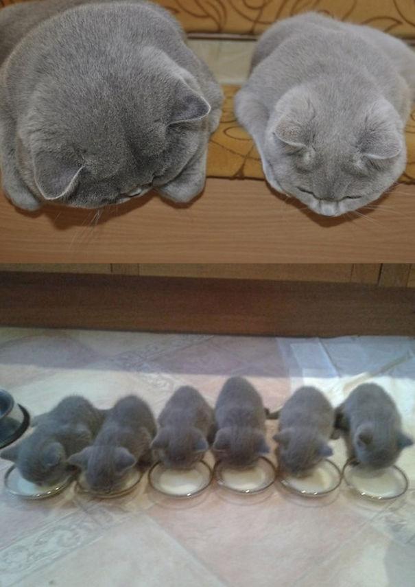 madres del mundo animal en apuros 4