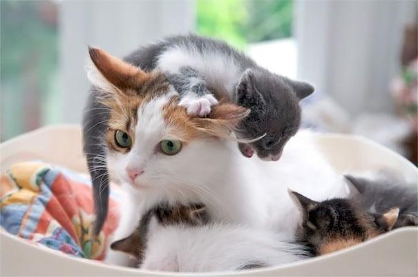 madres del mundo animal en apuros 5