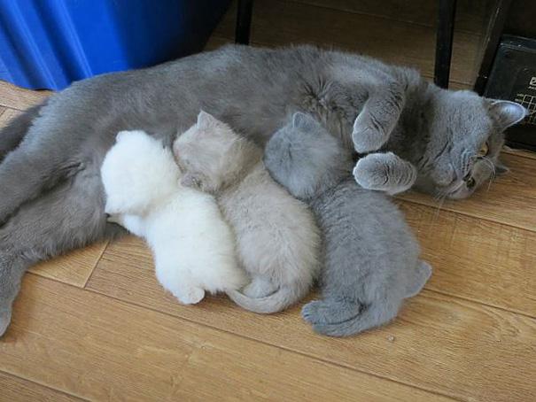 madres del mundo animal en apuros 9