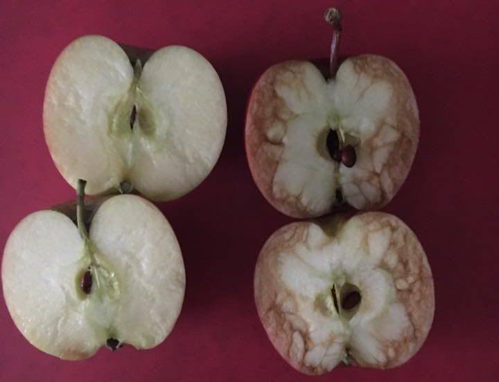 manzanas 1
