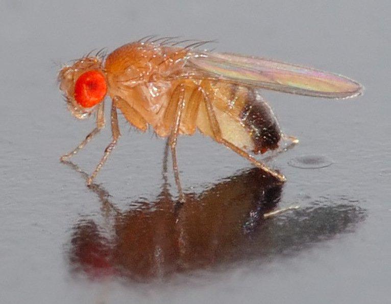 moscas remolinos 3
