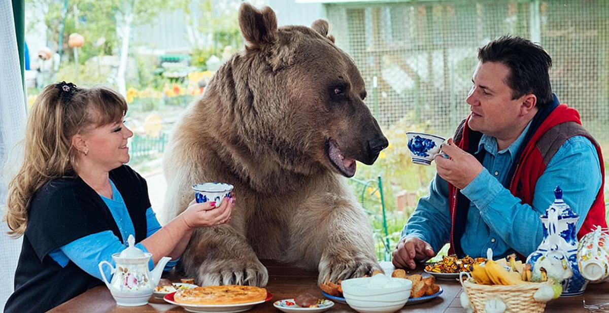 oso_familia_portada