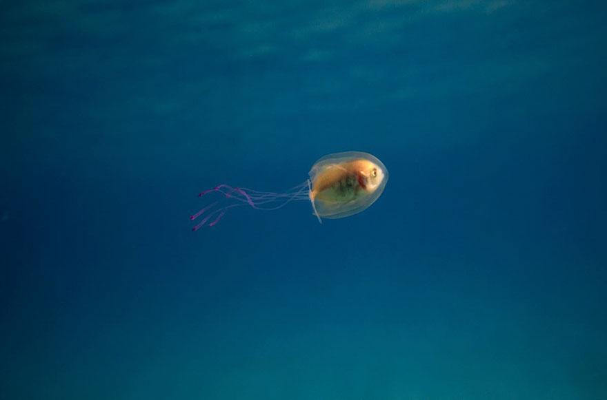 pez medusa 3