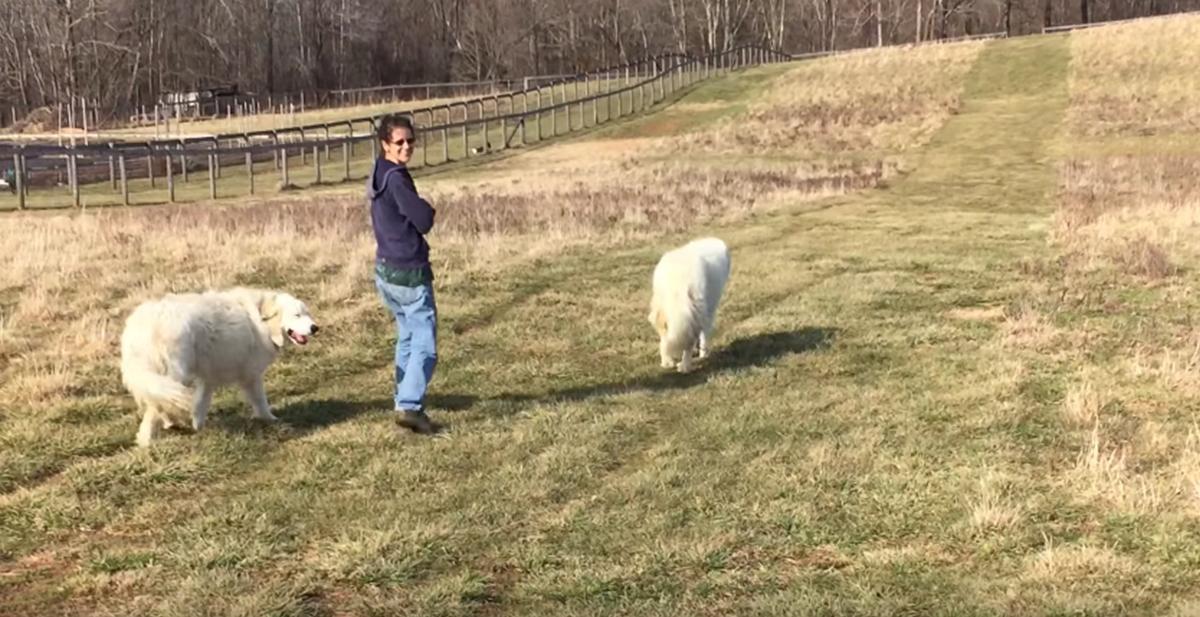 """""""Voy a dar un paseo solitario por el campo... o no"""""""