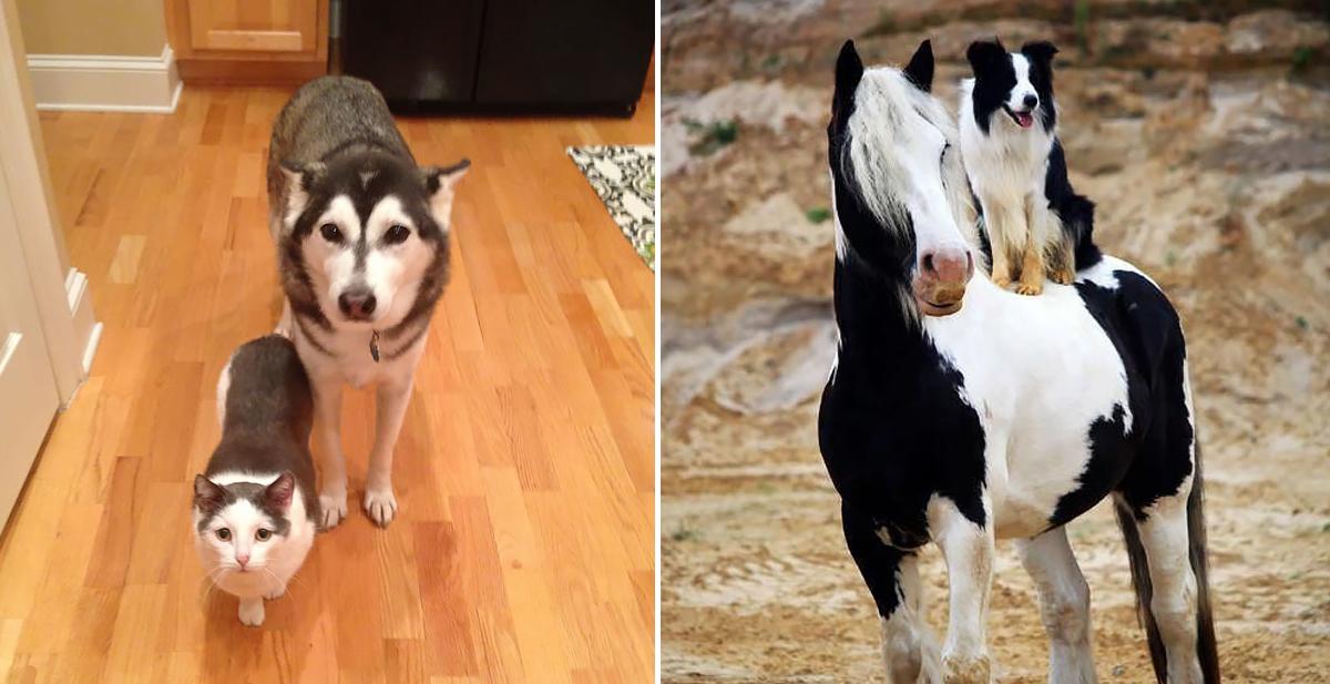 animales-hermanos-distinta-especie