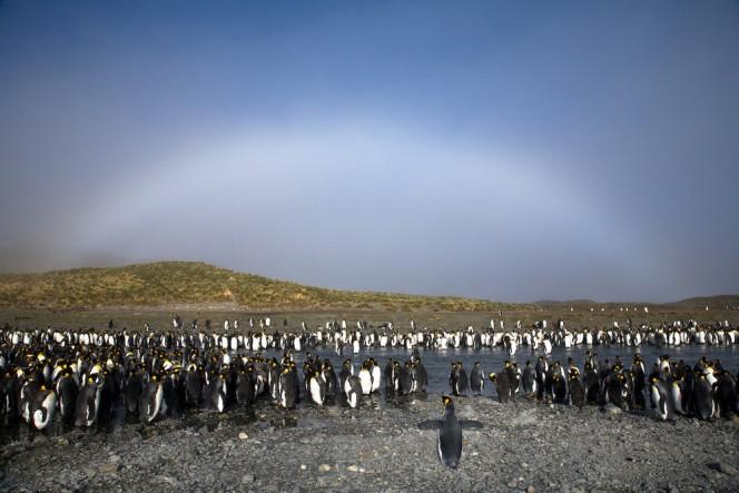 arco iris blancos de niebla 7