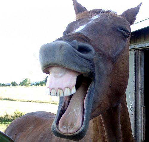 caballo_chiste_1