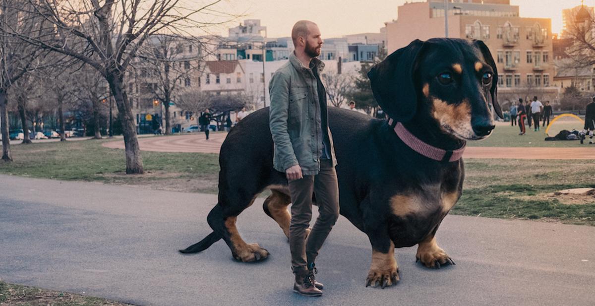 fotografía a su perro tal y como el lo ve