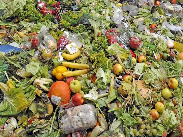 la comida que tiramos a los contenedores 5
