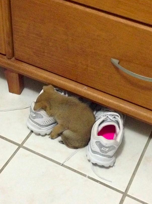 perros durmiendo de forma graciosa 13