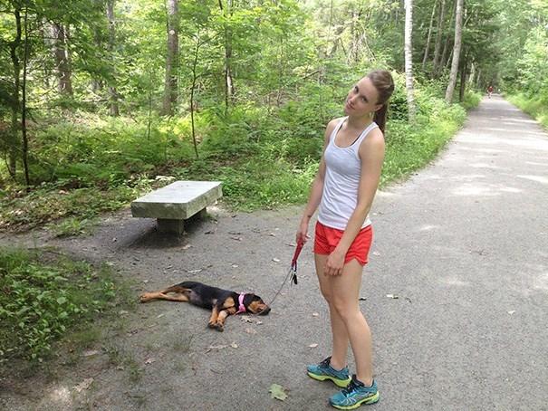 perros durmiendo de forma graciosa 9