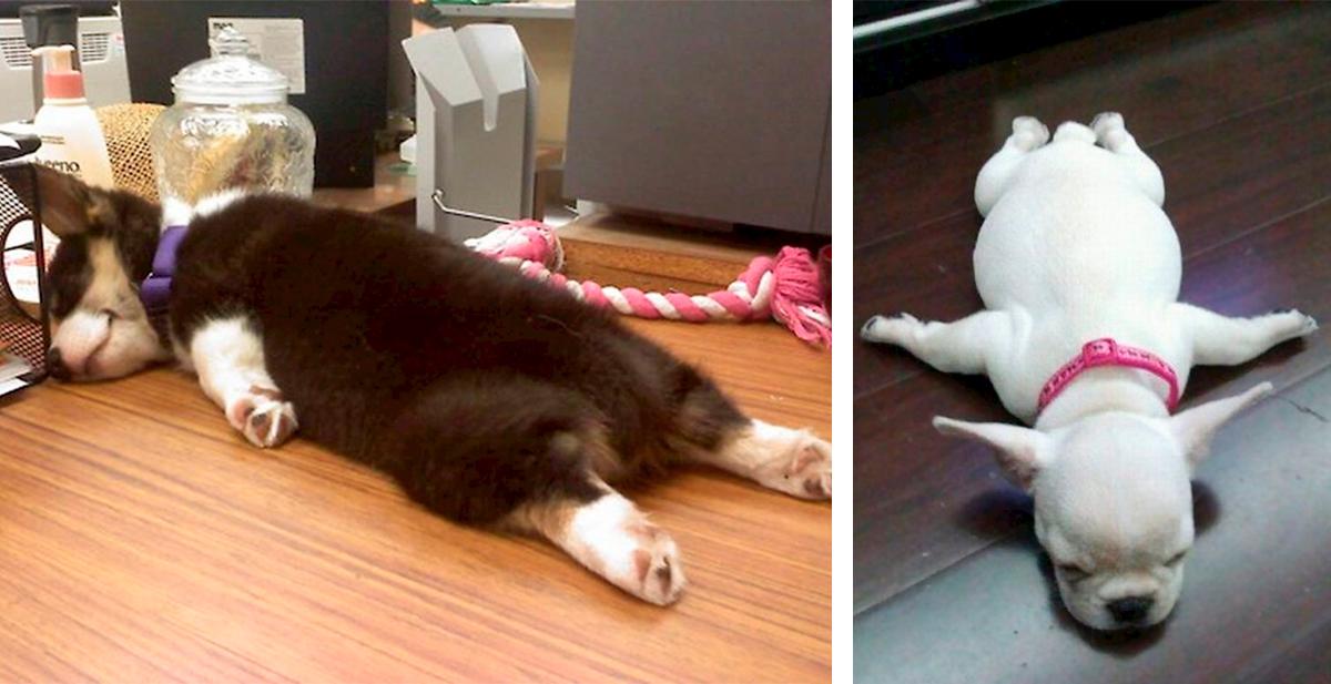 perros durmiendo de formas graciosas