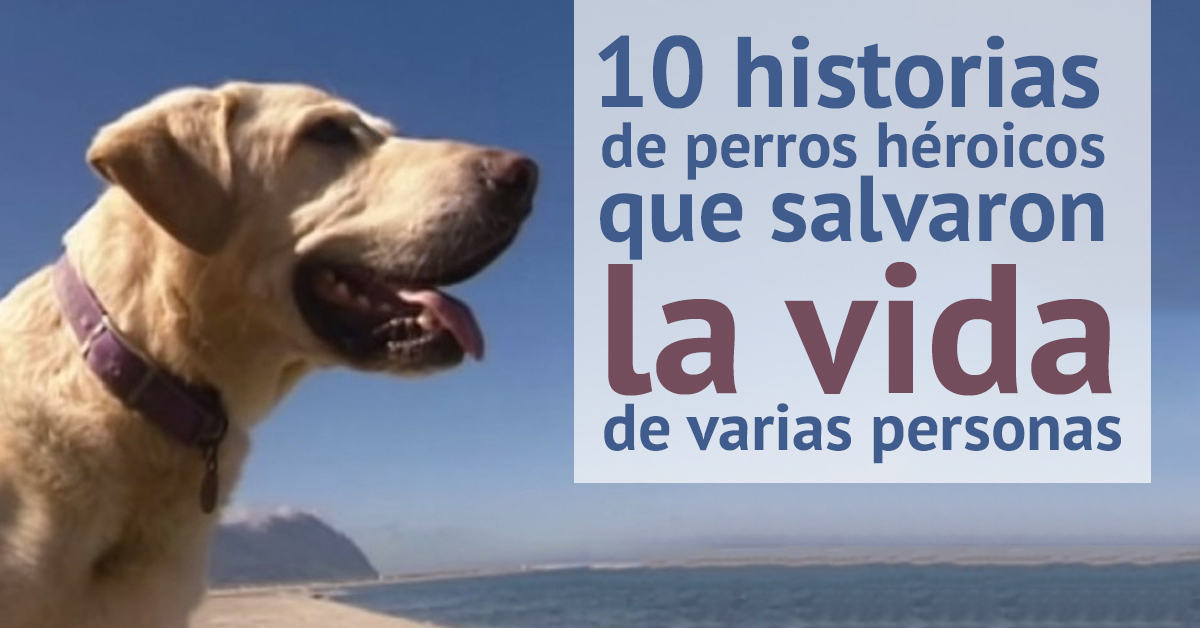 perros-heroicos